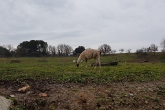 Serge notre lama